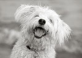 laughingdog